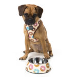 Harness_EasyFeeder_GoNuts_Dog_1