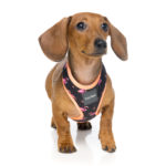 Harness_Fabmingo_Dog_2
