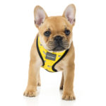 Harness_MonkeyMania_Dog_7