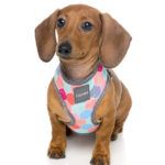 Harness_TheHive_Dog_1